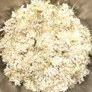 Holunderblüten im Topf